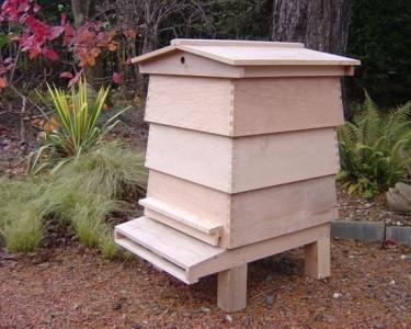 apiculteur nombre de ruche