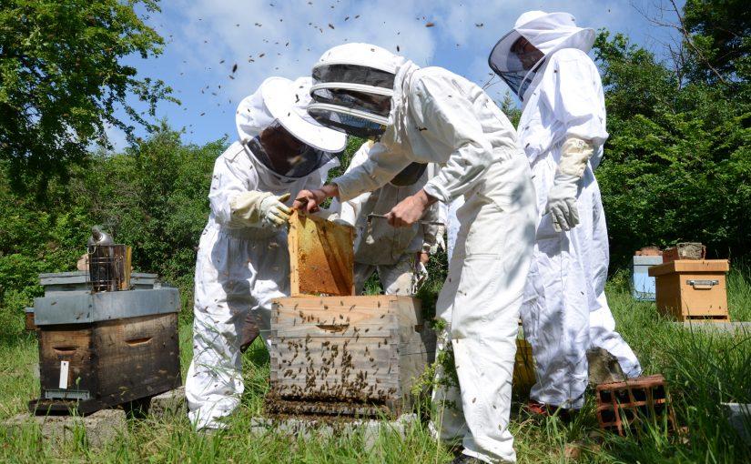 Formation d'apiculteur